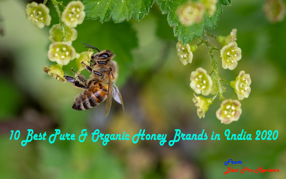 10 Best Pure & Organic Honey Brands in India 2020